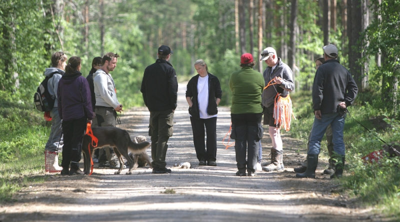 samling-i-skogen